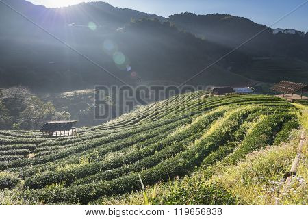 barrack in tea field when sunlight in deep valley