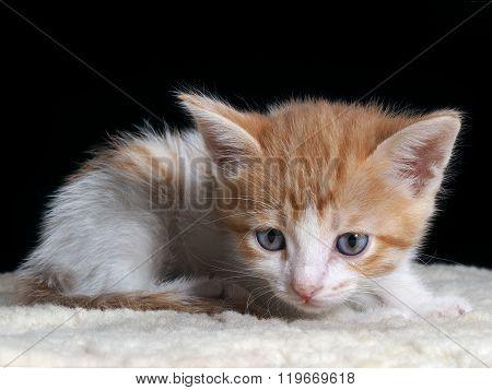Portrait of a kitten
