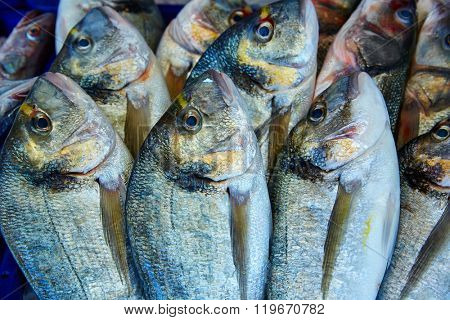 Dorada fish Sparus aurata stacked in a row from Mediterranean sea