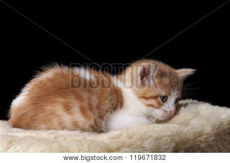 Kitten lying on a beige fur
