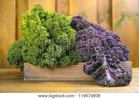 Freshly Harvested Green And Purple Curly Kale Cabbage