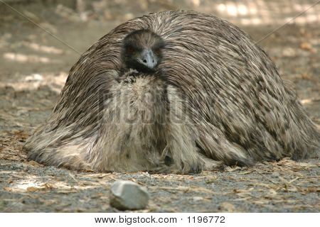 Tired Emu 2