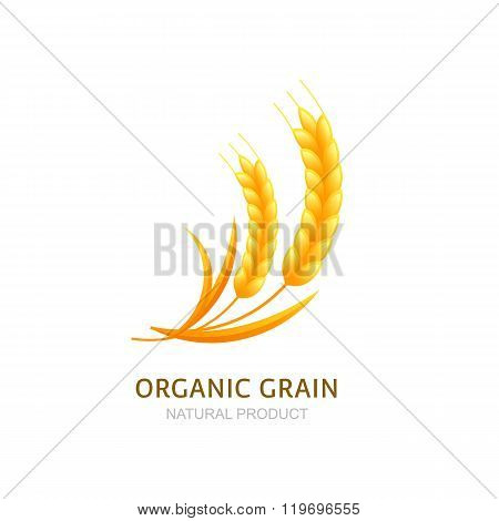 Wheat Or Rye Grain Logo, Icon Or Label Vector Design Elements.