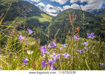 Flower meadow in Campo Tures South Tyrol Italy
