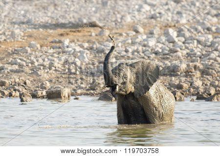 Elephant at a water hole in Etosha National Park