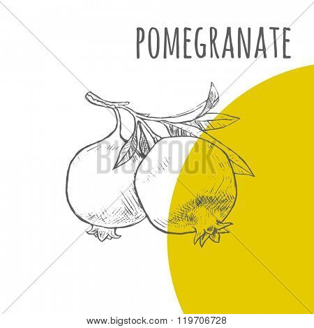 Pomegranate vector freehand pencil drawn sketch. Illustration of pomegranates bunch on branch with leaves. Part of set of fruits sketchy drawings.