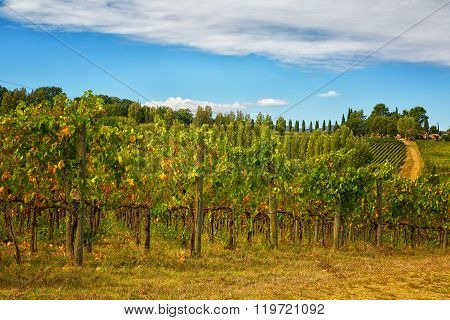 Rural Landscape With The Small House And Vineyard, Umbria, Italy