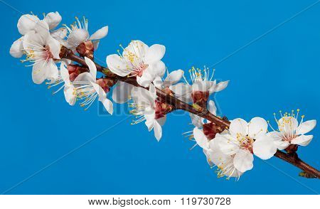 Macro Of Spring Fruiter Blossoms