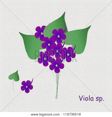 Hand paint violets, inscription Violet. Purple blue violets with yellow center, green leaves on a wh
