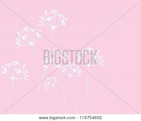 Fennel Flower Vector