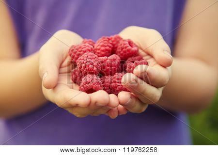 handful of red ripe raspberries in hands