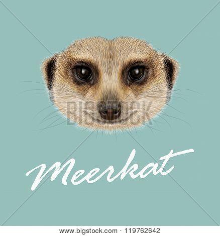 African Meerkat Portrait
