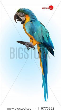 Blue and yellow parrot, macaw. Brazilian Ara.  Big wild tropical bird, Parrot sitting on a wooden br