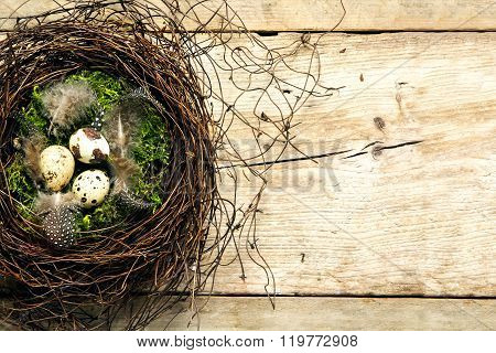 Easter Nest Of Twigs And Moss With Three Quail Eggs And Feathers On Rustic Wooden Planks