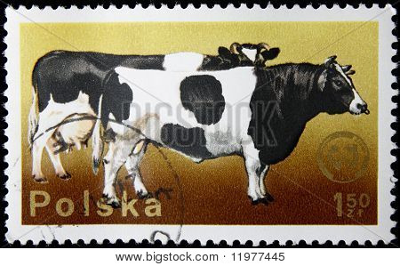 postage with a cow