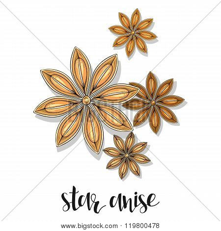 Star anise isolated object sketch. Spice for food. Culinary seasoning