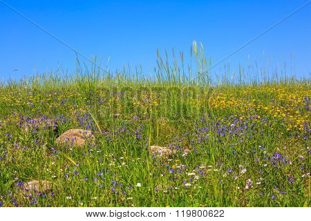 Spring flowering Golan. Gentle hills covered with a carpet of wild flowers