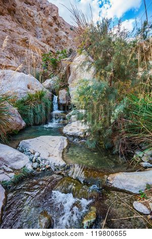 Ein-Gedi - the reserve of Israel. The picturesque stony gorge with noisy falls and  transparent fast stream
