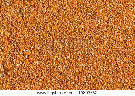 Corn Seed Texture, Agriculture Background.
