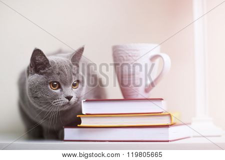 Cat sitting on wooden shelf with stack of books closeup