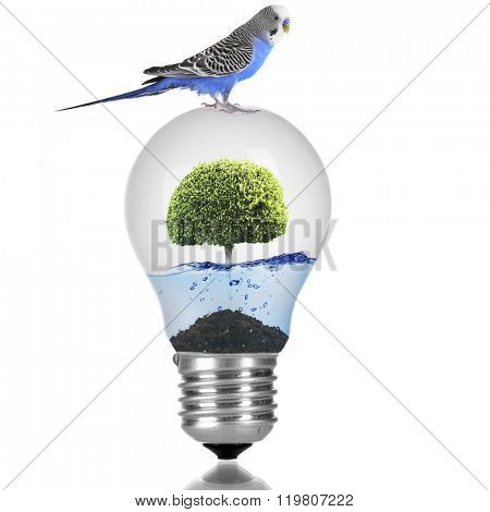 Little blue parrot sitting on light bulb with water and green tree isolated on white