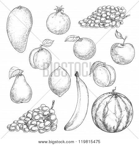 Fresh fruits sketches for food design