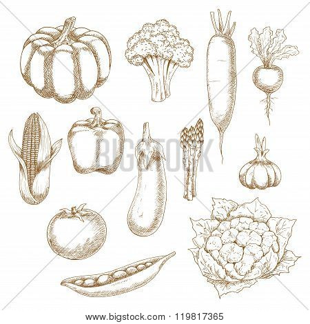 Retro stylized sketches of ripe vegetables