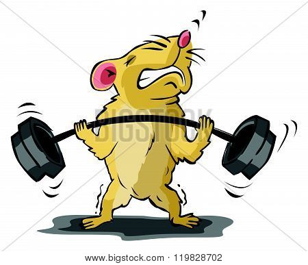 Hamster body building training