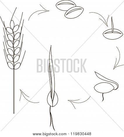 The cultivation of cereal  seeds icons, agronomy. Thin black lines on a white background. Planting s