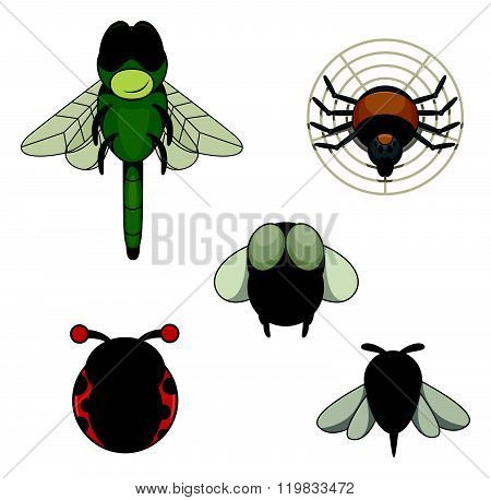 nsect animal : Dragon Fly, Spider, Fly, Mosquito and Bug