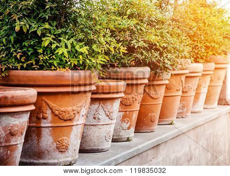 Clay pots with plants