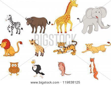 Wild animal safari illustration funny cartoon design