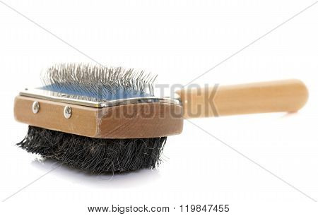Dog Brush In Studio