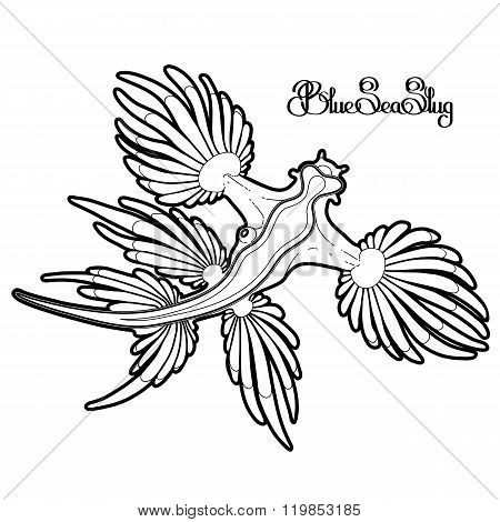 Sea slug drawn in line art style. Vector ocean creature isolated on white background