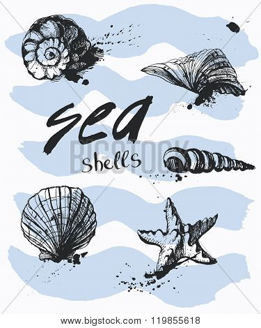 Vector Set Of Hand Drawn Seashells. Shells On A Sea Background With Handwritten Text.