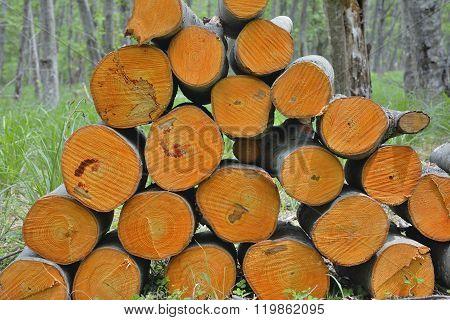 Pile Of Alder Logs