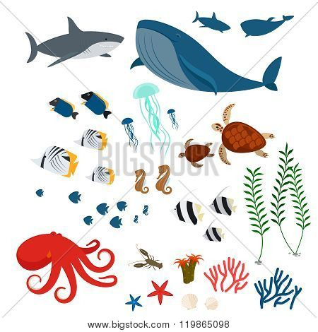 Ocean animals and fishes