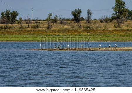 Rabisha  lake and group of great heron or grane (Grus cinerea) relax at the water s  peninsula