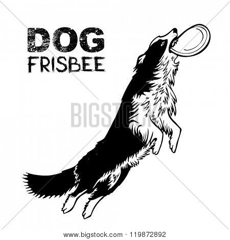 Dog frisbee sports, vector illustration