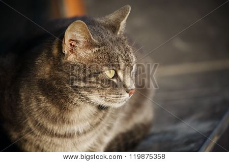 Pleased Street Cat Sitting Squinting On Sunset