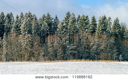 Winter trees covered with fresh snow