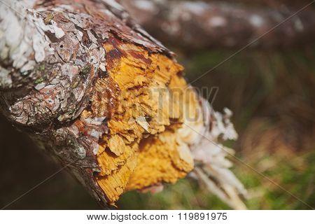 Tronco de árbol caído