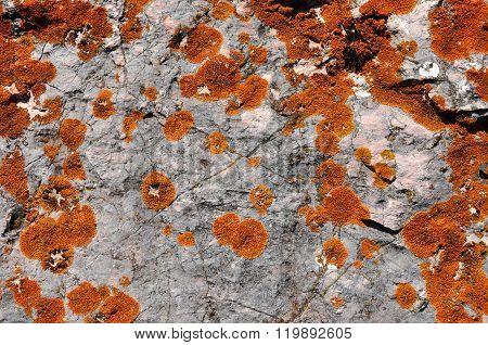 Orange Lichen On Limestone