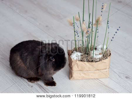 Flower Composition With Cotton , Lavender And Green Grass,