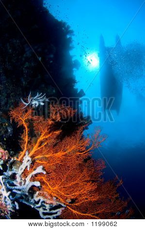 Coral Near Surface Indonesia Sulawesi