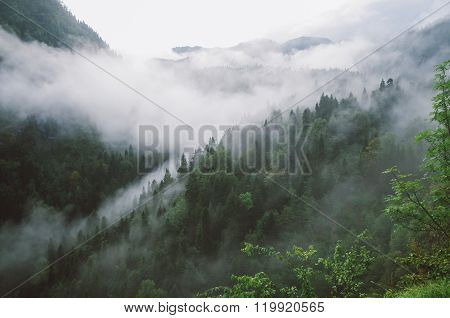 Mountain gorge in the mist
