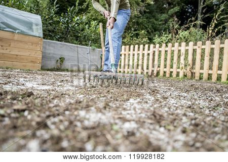 Man Doing Yard Work Raking The Ground