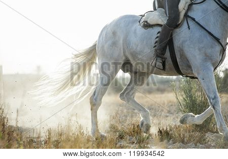 Detail Of Running Spanish Horse And Rider