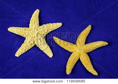 Two star fish