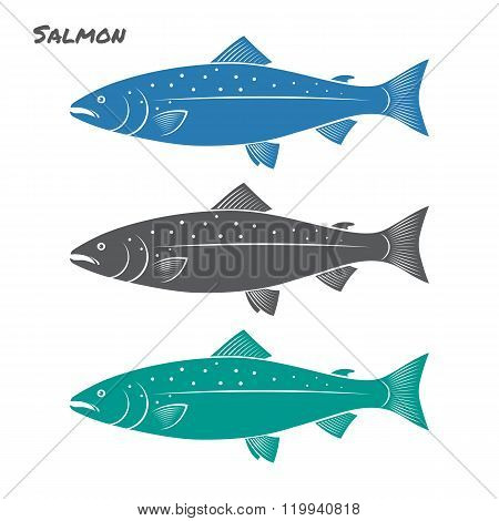 Salmon fish vector illustration on white background